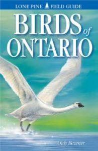 Birds of Ontario